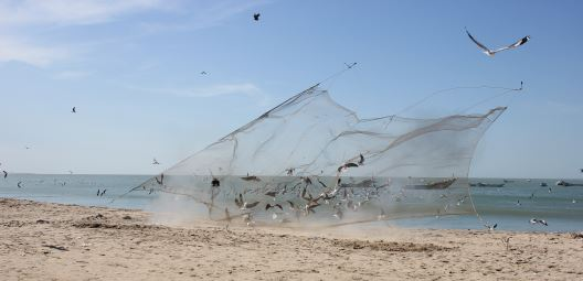 Cannon netting